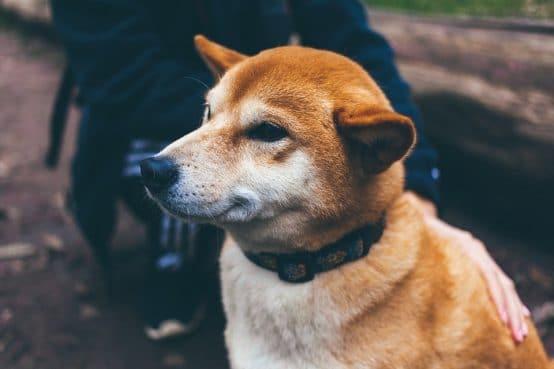 Collier électrique chien