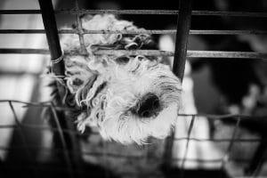top cage chien