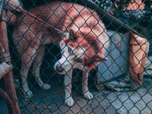 meilleur enclos pour chien d'extérieur