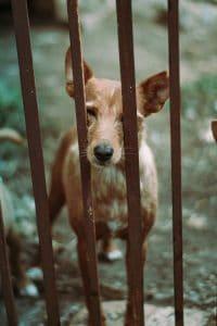 enclos pour chien est en métal