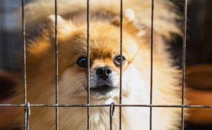 cage pour animal de compagnie