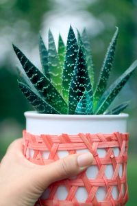 planter aloe vera