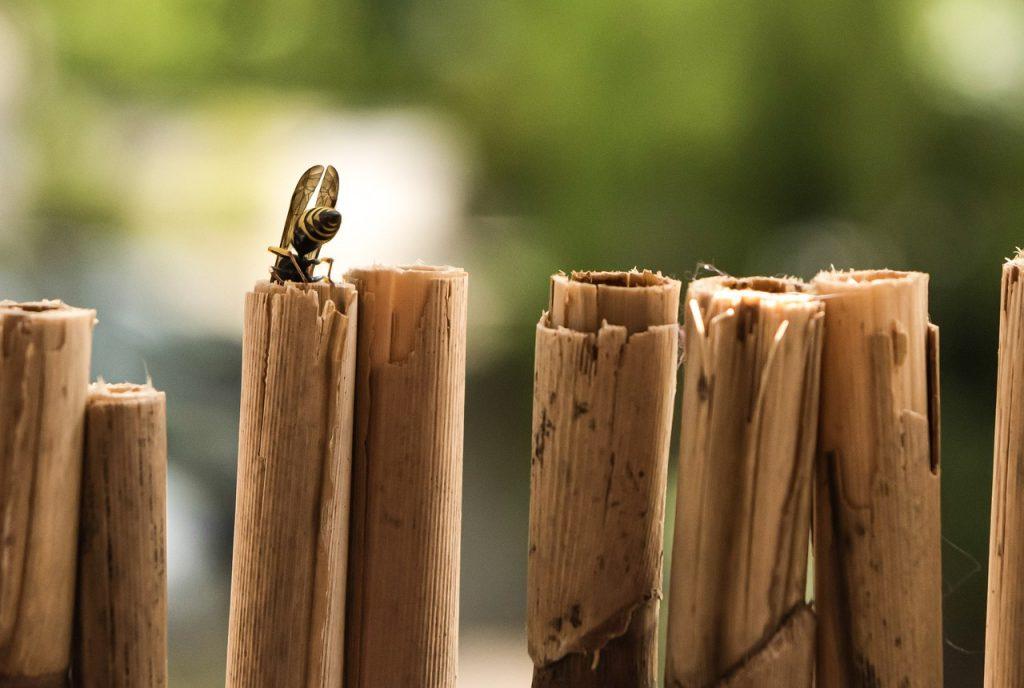 canisse en bambou